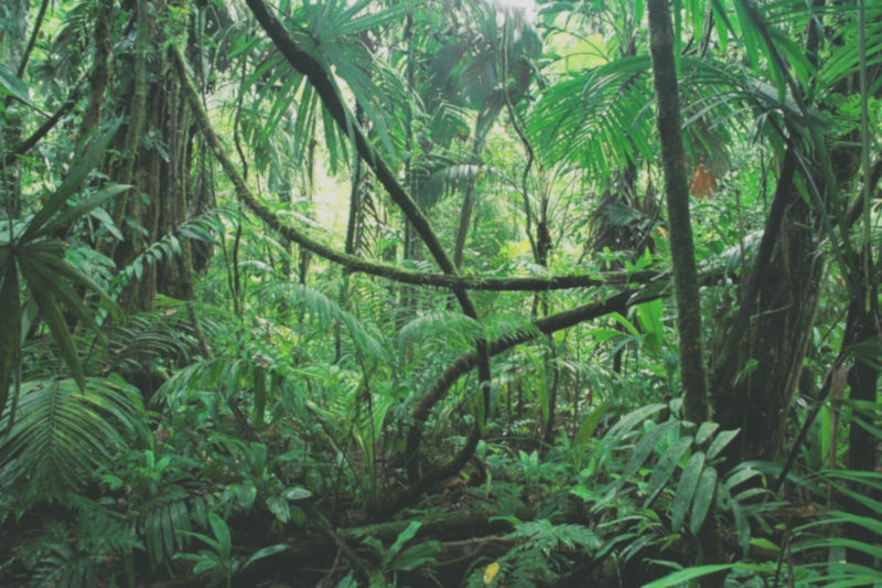Top 7 Overlooked Things to Do if You Get Lost in the Jungle