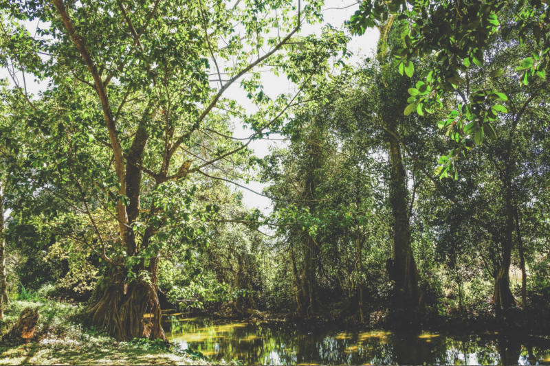 Swamp Survival Guide: Proven Tips and Tricks To Stay Alive